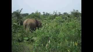 Elephants at Udawalawe Nationalpark