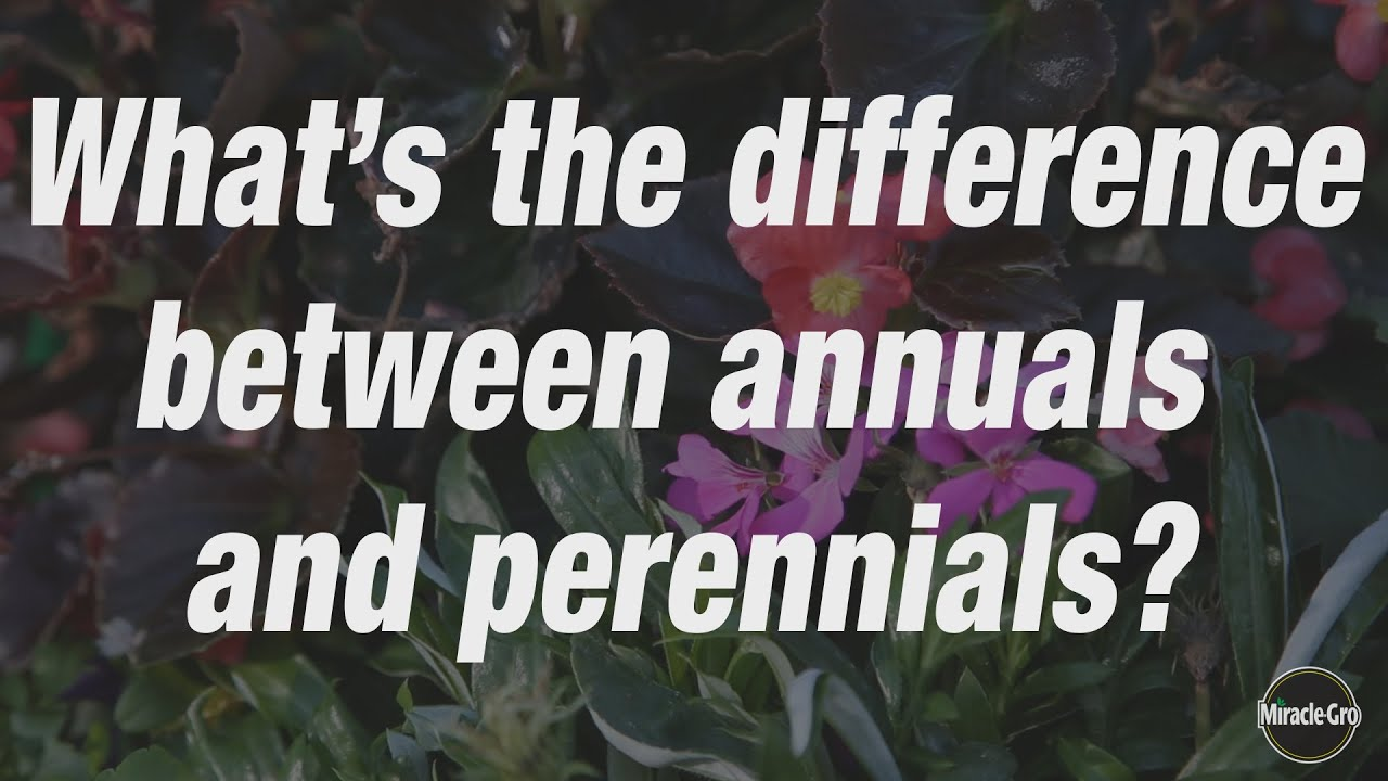 Whats the difference between perennials and annuals scotts whats the difference between perennials and annuals scotts miracle gro canada izmirmasajfo