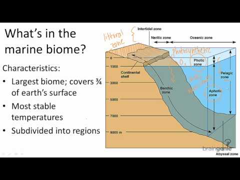 18.1.2 What's In The Marine Biome