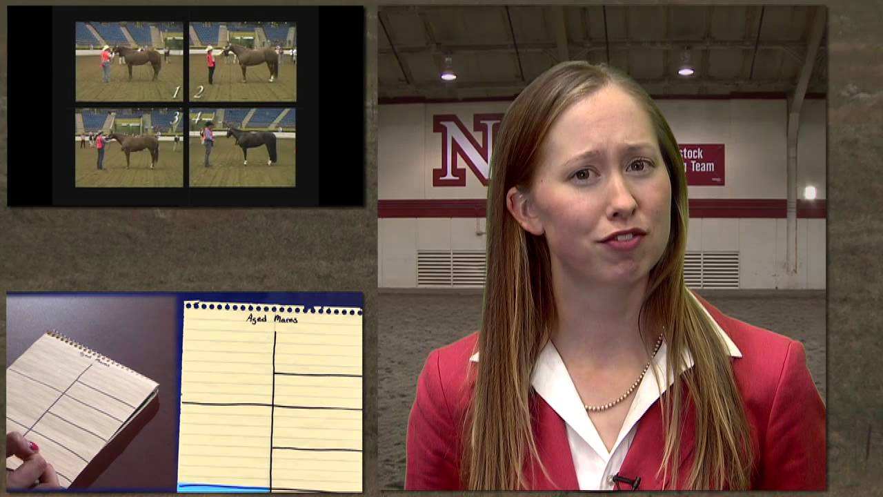 Unl Horse Judging Presenting Oral Reasons For Horse Judging Youtube