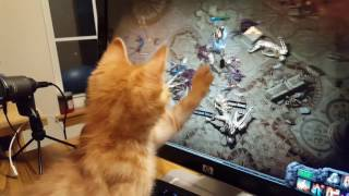My cat helping me on my online game Path of Exile(My cat name is Pess but some time I call him Pester., 2016-09-21T17:44:02.000Z)