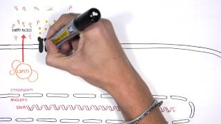 Insulin Signalling Pathway Minardo