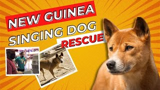 Furthest from the Wild Episode 4: The New Guinea Singing Dogs