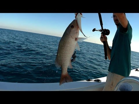 BIG Mangrove Snapper and Yellowtail Snapper | Florida Offshore Bottom Fishing