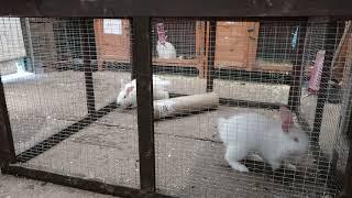 FarmCam | Baby Rabbits