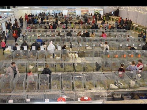 Продажа кроликов на рынке - YouTube