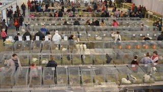 Обзорное видео выставки породных птиц и кроликов в Екатеринбурге(За два дня выставку посетило более 10 000 человек, из более чем 30 регионов России. Это обзорное видео V самая..., 2015-01-29T18:34:22.000Z)