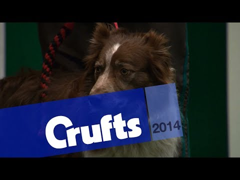 YKC Agility Dog of the Year | Crufts 2014
