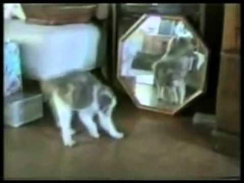 Kenh24.vn - Những chú mèo ngu si nhất