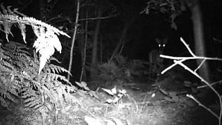 reebok // roe deer forest harich