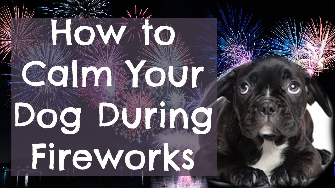 what to do if my dog is scared of fireworks