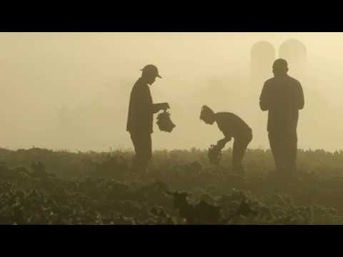 How We Can Heal People and the Planet with Regenerative Organic Agriculture