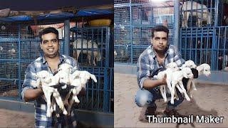 My GOATS FARM videos 🐐🐐🌟STAR GOATS FARM    🌟🐐🐐 Mumbai Maharashtra  8879809944 / 9029944440