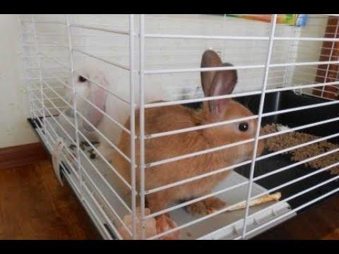 Уход и уборка клетки за декоративными кроликами