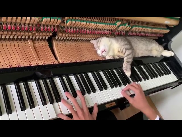 Cat Lies Down on Piano Keys While Human Plays a Tune – 1034223-2
