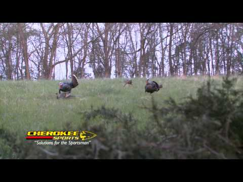 Mad Gobbler Beat Down - Chase Rutledge Turkey Hunt