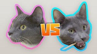 cats-try-42-snacks-artyom-vs-neighbour-s-cat