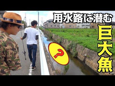 住宅街の用水路であの魚を釣る!!