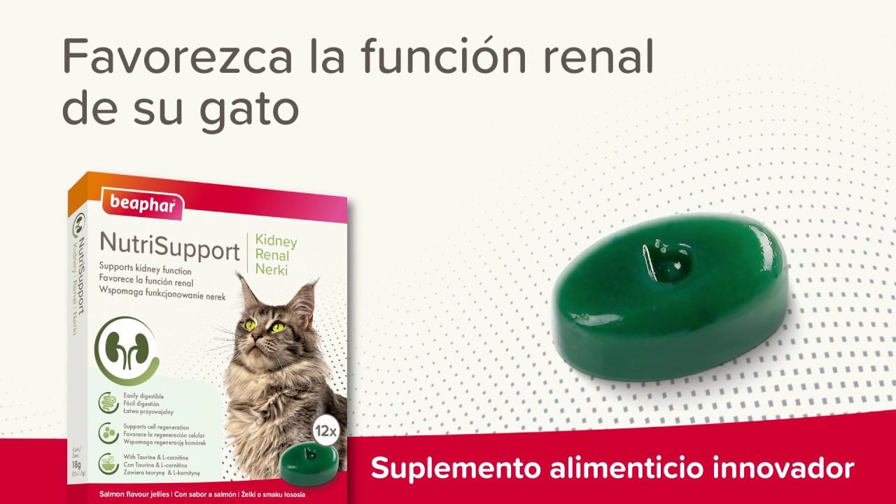 Suplemento alimenticio cuidado renal para gatos Beaphar Nutrisupport
