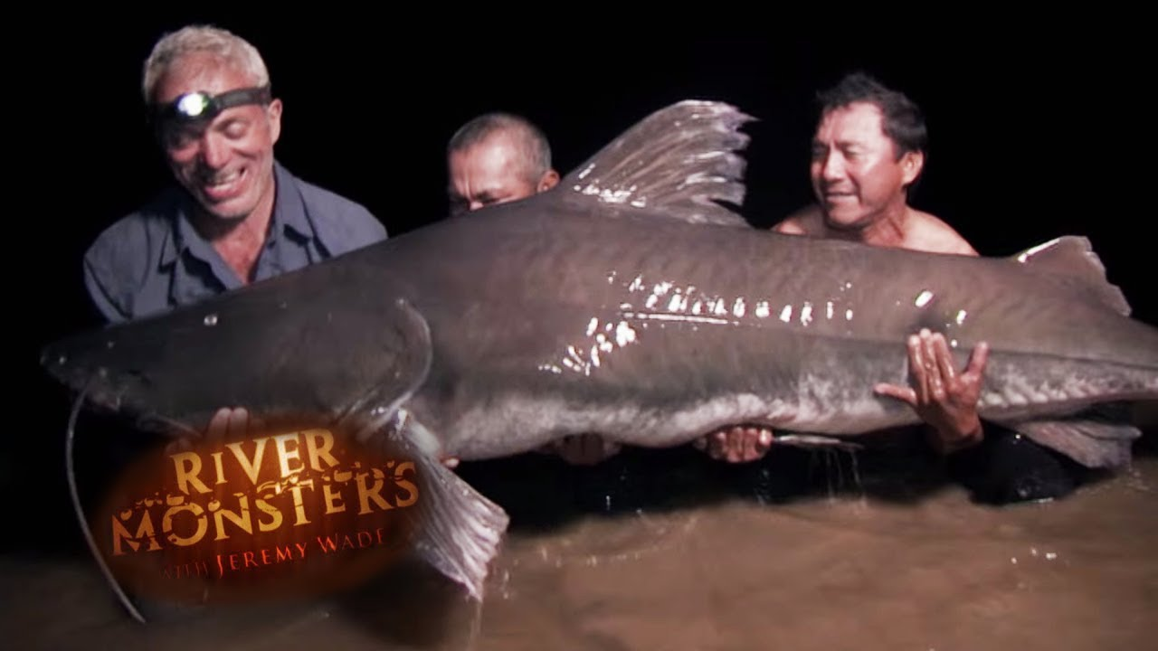 Hunting For The Brazillian Lau Lau Catfish River Monsters Youtube