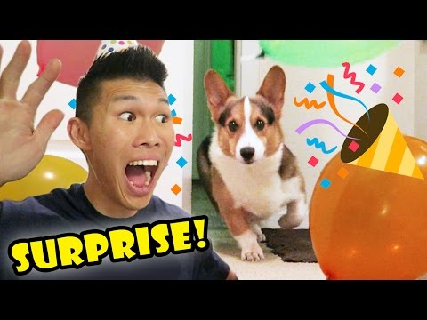 SURPRISING My CORGI Dog w/a BIRTHDAY PARTY || Life After College: Ep. 527