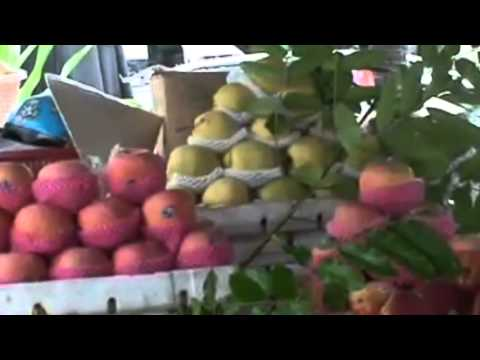 MRVN VIETNAM CONSUMERS DONT WANT CHINA FRUIT AND VEGETABLES