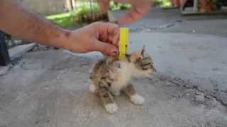 Amazing Cool Cat Tricks- Cat Playing Dead [*Must Watch*]