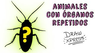 ANIMALES CON ÓRGANOS REPETIDOS | Draw Xpress