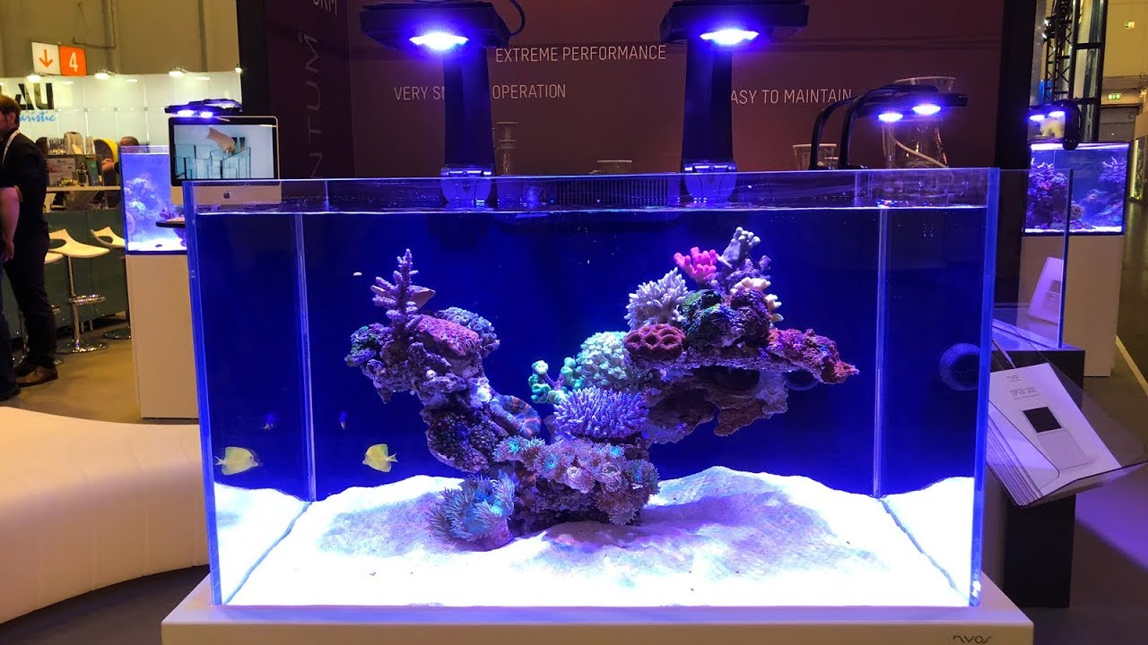 cool new reef gear at interzoo 2018