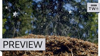 Ants protect nest with acid attack - Natural World: Attenborough and the Empire of the Ants - BBC