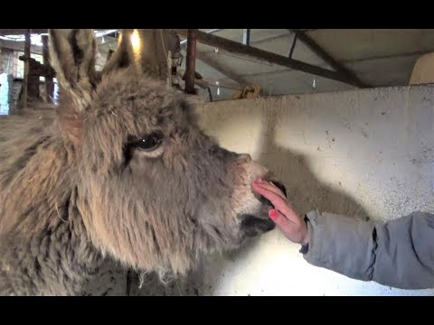 World's Hairiest Baby! (Gordon - Our New Miniature Donkey Foal - Arrives..)