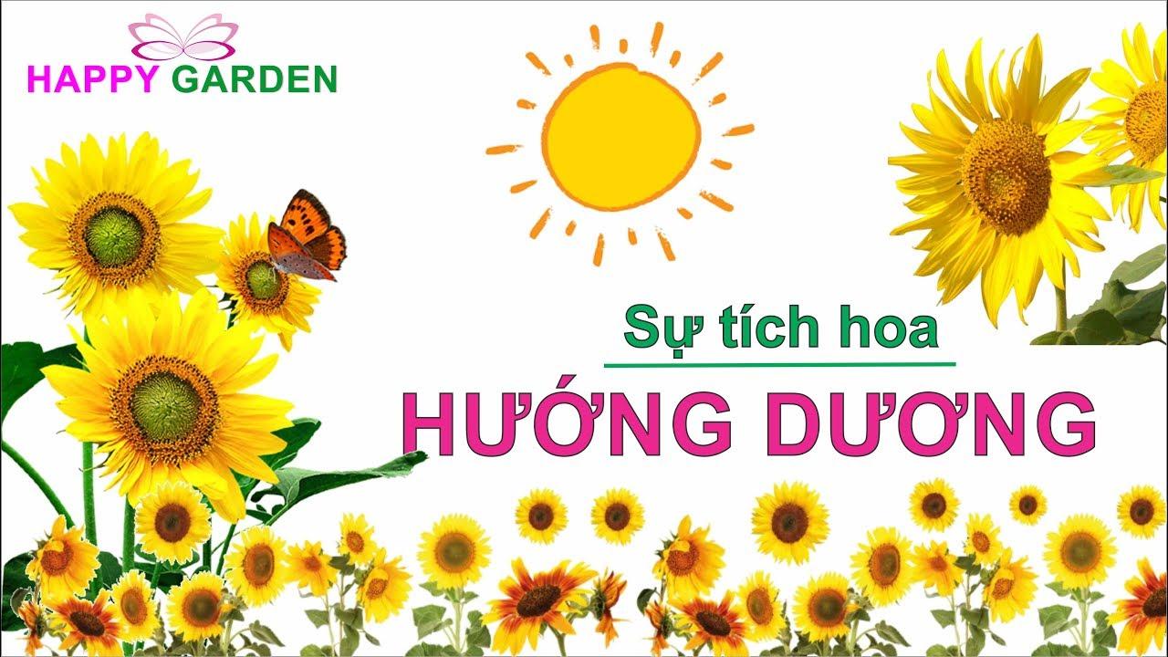 Sự tích hoa hướng dương 2 – Happy Garden