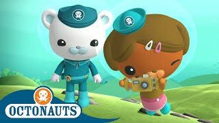 Octonauts - Dashi the Photographer | Cartoons for Kids | Underwater Sea Education