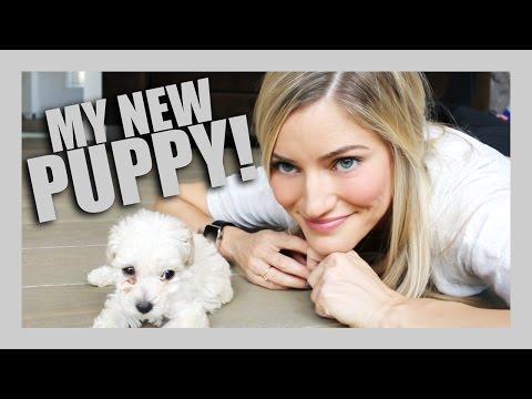 I GOT A PUPPY! | iJustine