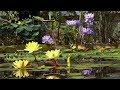 Ботанический сад. Викторная оранжерея (2018)