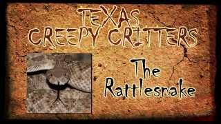 Texas Creepy Critters: The Rattlesnake