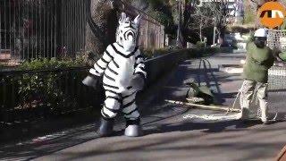 Zebra Zoo Escape in Tokyo