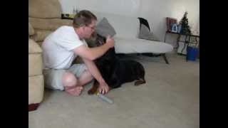 Rottweiler Attacks Owner While Using The Pedi-paw