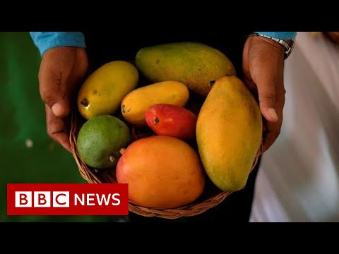 The mango so popular it has to be auctioned - BBC News