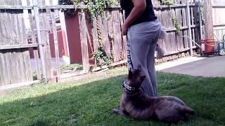 Long Island Dog Training