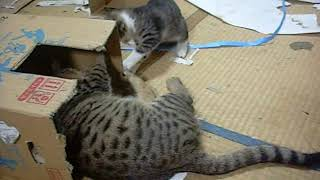 2018 11090108 エサ場の猫家族 thumbnail