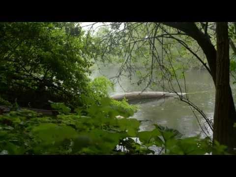 Sound of Rain - Nature recording Copenhagen May 2013