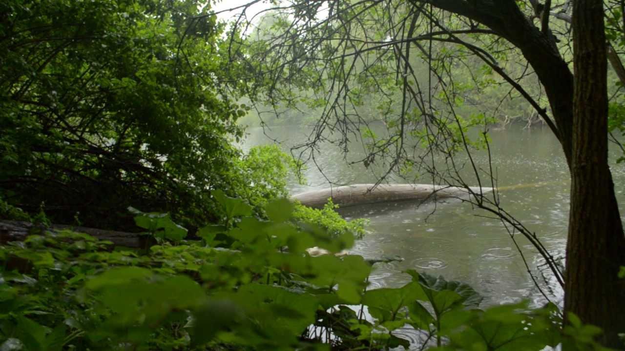 Sound of rain nature recording copenhagen may 2013 youtube - Rainy nature hd wallpaper ...