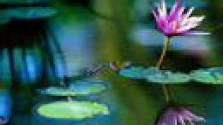 Banda Lady Sepia - NO JARDIM