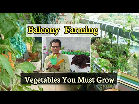 Download Grow a Vegetable Garden on a Balcony | Growing in Small Spaces  | Balcony Farming
