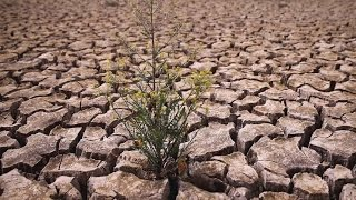 California's Drought: Why You Should Care