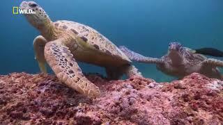 Большой Барьерный риф и его обитатели