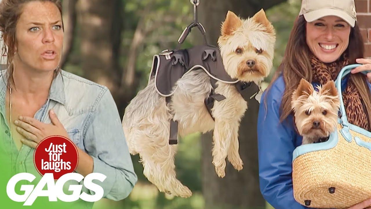 Best Of Dog Pranks | Just For Laughs Compilation