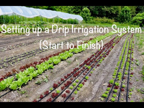 Setting Up A Drip Irrigation System (Start To Finish)