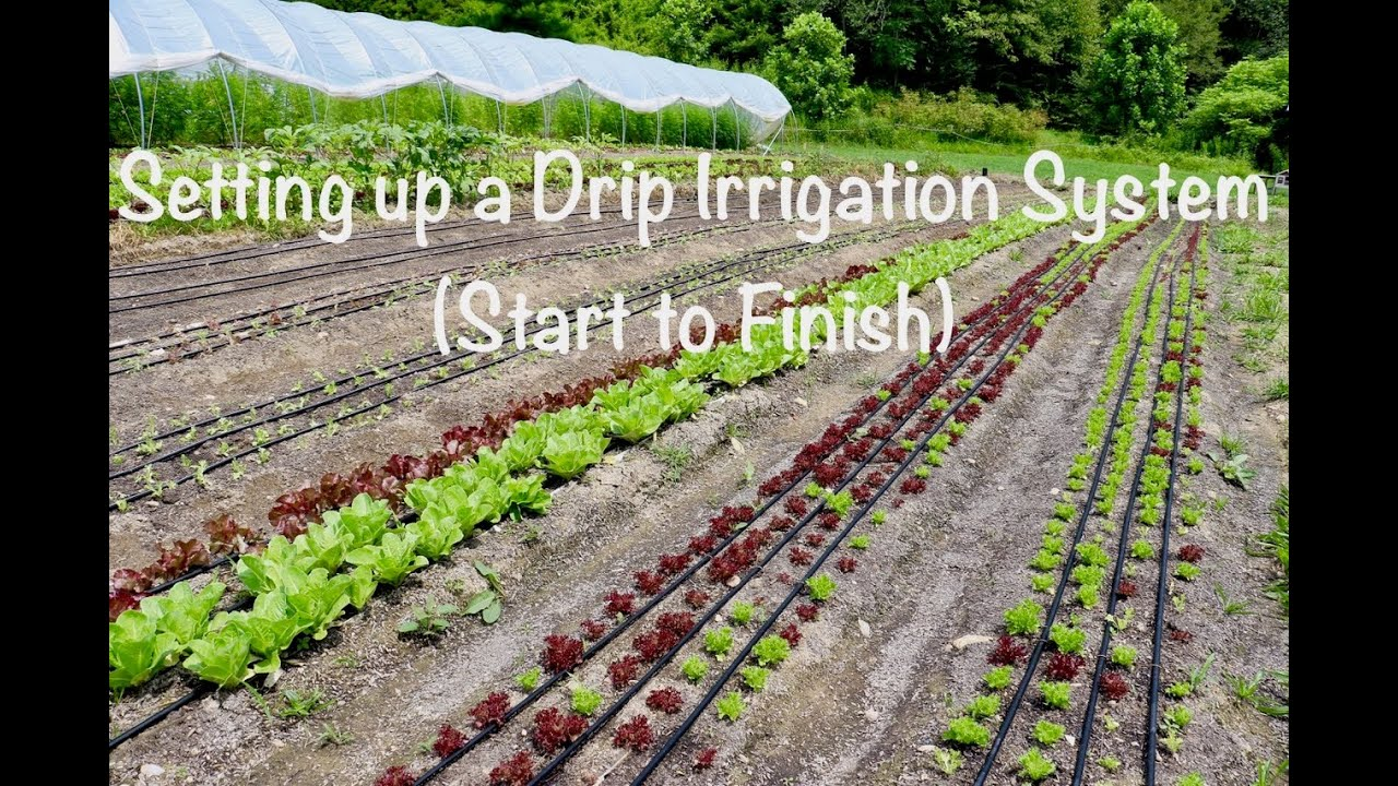 Setting Up A Drip Irrigation System Start To Finish You